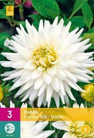 Dahlia Cactus Wit (5 zakjes)