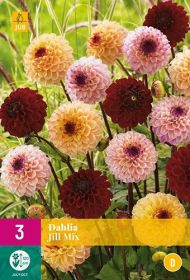 Dahlia Jill Mix (5 zakjes)