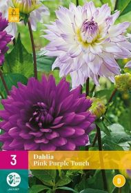 Dahlia Pink Purple Touch (5 zakjes)