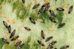 Aaltjes F tegen larven trips