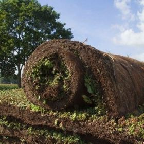Sedum vegetatiemat